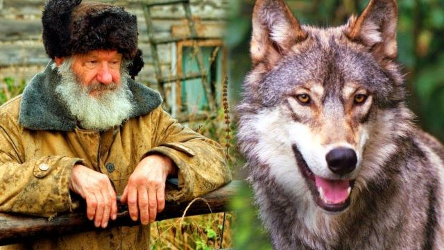 This Old Man Saved a Wolf Pup   When the Wolf grew up, He Returned the Favor in an Unbelievable Way!