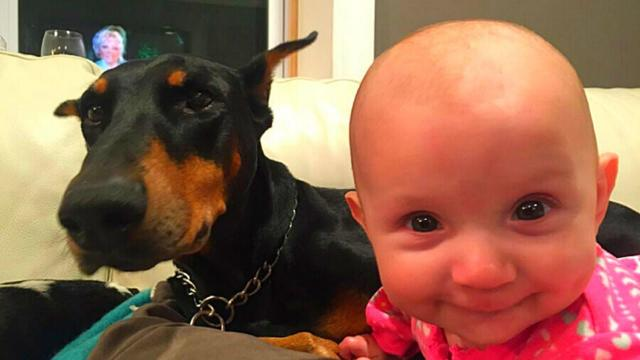 This Little Girl Was In A Huge Danger, But Her Hero Dog Did This