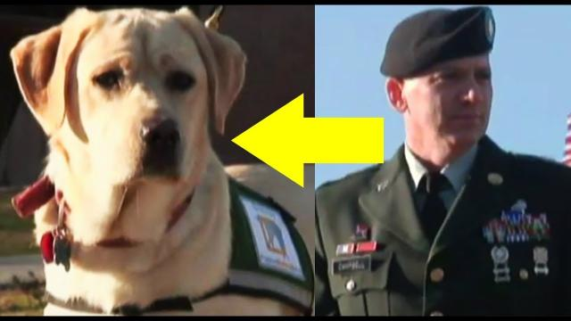 Man Brings His Service Dog To A Prison Yard For A Very Unexpected Reunion