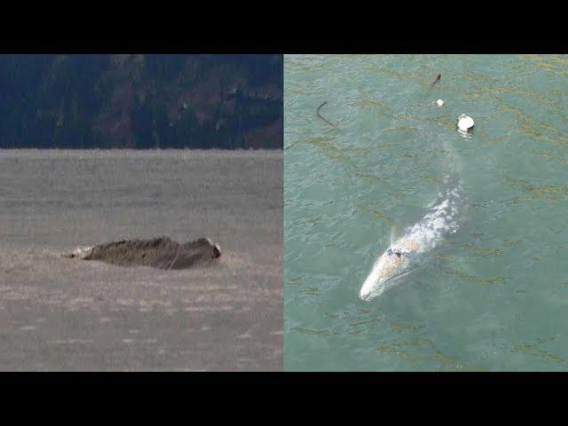 Mystery sea monster filmed slithering down Asia's longest river