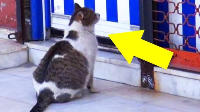 Stray cat calls for help outside health clinic – the reason is Heartbreaking