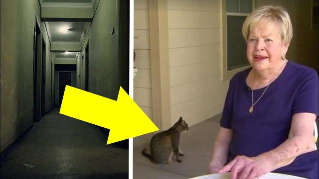 While Searching For Her Escaped Cat On A Wintry Night, Old Woman Stumbles Upon An Unbelievable Sight
