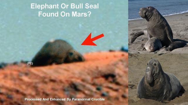 Elephant Or Bull Seal Found On Mars?