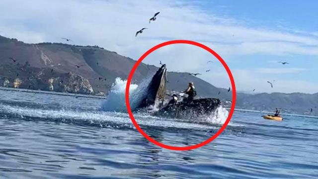 This is what happens when a Whale Eats. This huge whale shocked everyone when it swallowed a man