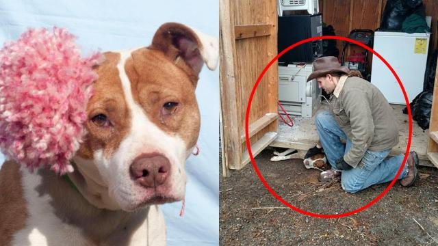 Man saves pregnant dog trapped under a shed, dog thanks him with kisses and hugs